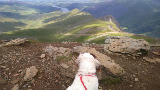 snowdon with a dog